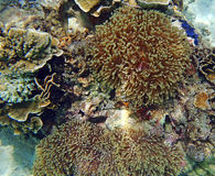 Ψάρια Anemone και μαλακό κοράλλι Στοκ φωτογραφία με δικαίωμα ελεύθερης χρήσης