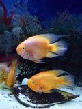Ψάρια Aquarian Στοκ φωτογραφία με δικαίωμα ελεύθερης χρήσης