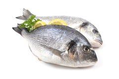 ψάρια dorada στοκ φωτογραφία με δικαίωμα ελεύθερης χρήσης