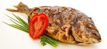 Ψάρια Dorada Στοκ Εικόνες