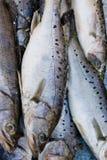 ψάρια fishfresh παγωμένα Στοκ φωτογραφία με δικαίωμα ελεύθερης χρήσης
