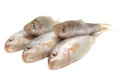 Ψάρια Fresah Στοκ Φωτογραφίες