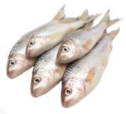 Ψάρια Fresah Στοκ φωτογραφίες με δικαίωμα ελεύθερης χρήσης