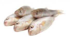 Ψάρια Fresah Στοκ Εικόνες