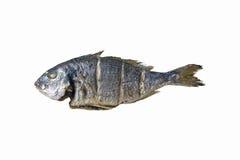 ψάρια gilthead στοκ εικόνες με δικαίωμα ελεύθερης χρήσης