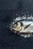 Ψάρια Gilthead Στοκ φωτογραφία με δικαίωμα ελεύθερης χρήσης