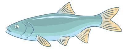 Ψάρια IDE Στοκ Εικόνα