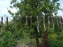 Ψάρια jerky Στοκ φωτογραφία με δικαίωμα ελεύθερης χρήσης