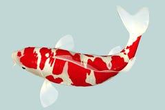 Ψάρια Koi Στοκ εικόνα με δικαίωμα ελεύθερης χρήσης