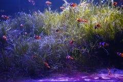 Ψάρια Moray Στοκ φωτογραφίες με δικαίωμα ελεύθερης χρήσης