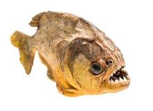 Ψάρια Piranha απομονωμένος Στοκ Εικόνες