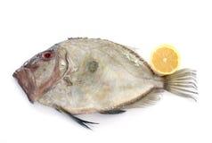 Ψάρια Zeus faber Στοκ εικόνες με δικαίωμα ελεύθερης χρήσης