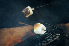 Ψήνοντας Marshmallows πέρα από μια πυρκαγιά στοκ εικόνα