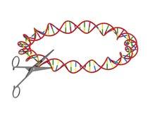 Ψαλίδι που κόβει το DNA Στοκ εικόνα με δικαίωμα ελεύθερης χρήσης