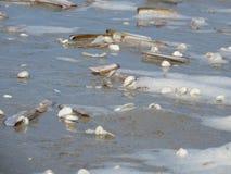 ψαλιδίζοντας απομονωμένο λευκό κοχυλιών θάλασσας μονοπατιών Στοκ φωτογραφίες με δικαίωμα ελεύθερης χρήσης