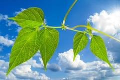 ψαλιδίζοντας πράσινο μον& στοκ φωτογραφίες