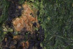 ψαμμίτης ανασκόπησης αλγών Στοκ εικόνες με δικαίωμα ελεύθερης χρήσης