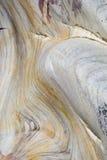 ψαμμίτης ανασκόπησης Στοκ Εικόνα