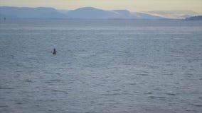 Ψαράδες που αλιεύουν στην ακτή, Κόνακρι, Γουινέα απόθεμα βίντεο
