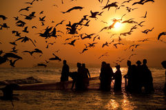 ψαράδες omani Στοκ εικόνες με δικαίωμα ελεύθερης χρήσης