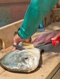 Ψαράς που διακοσμεί ένα ψάρι αδειών με σειρήτι Στοκ φωτογραφίες με δικαίωμα ελεύθερης χρήσης