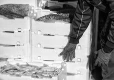 Ψαράς που καθιστά το σωρό των κλουβιών πλήρη των πρόσφατα πιασμένων ψαριών Στοκ φωτογραφία με δικαίωμα ελεύθερης χρήσης