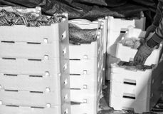 Ψαράς που καθιστά το σωρό των κλουβιών πλήρη των πρόσφατα πιασμένων ψαριών Στοκ εικόνα με δικαίωμα ελεύθερης χρήσης