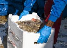 Ψαράς που καθιστά το σωρό των κλουβιών πλήρη των πρόσφατα πιασμένων ψαριών Στοκ Εικόνα
