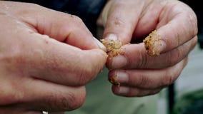 Ψαράς που προετοιμάζει ένα σκουλήκι αλιείας δολώματος αγκίστρι αλιείας ανασκόπησης που απομονώνεται whie απόθεμα βίντεο