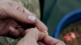 Ψαράς που προετοιμάζει ένα σκουλήκι αλιείας δολώματος αγκίστρι αλιείας ανασκόπησης που απομονώνεται whie φιλμ μικρού μήκους