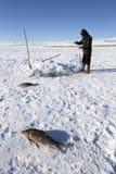 Ψαράδες που αλιεύουν με τη χρησιμοποίηση του διχτυού ψαρέματος στην παγωμένη λίμνη Cildir σε Ard Στοκ φωτογραφίες με δικαίωμα ελεύθερης χρήσης