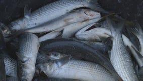 Ψαράδες στην εργασία 6 απόθεμα βίντεο