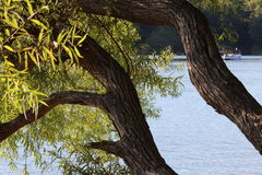 Ψαρευμένες απόψεις Στοκ Εικόνα