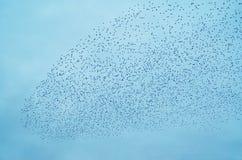 ψαρόνια κοπαδιών Στοκ φωτογραφίες με δικαίωμα ελεύθερης χρήσης