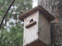 Ψαρόνι κοντά στο birdhouse Τεχνητό bird& x27 φωλιά του s στοκ φωτογραφία με δικαίωμα ελεύθερης χρήσης