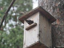 Ψαρόνι κοντά στο birdhouse Τεχνητό bird& x27 φωλιά του s στοκ εικόνες με δικαίωμα ελεύθερης χρήσης