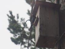 Ψαρόνι κοντά στο birdhouse Τεχνητό bird& x27 φωλιά του s στοκ φωτογραφίες με δικαίωμα ελεύθερης χρήσης