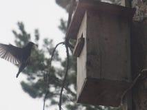 Ψαρόνι κοντά στο birdhouse Τεχνητό bird& x27 φωλιά του s στοκ εικόνα