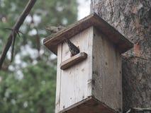 Ψαρόνι κοντά στο birdhouse Τεχνητό bird& x27 φωλιά του s στοκ φωτογραφίες