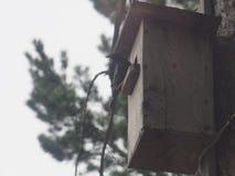 Ψαρόνι κοντά στο birdhouse Τεχνητό bird& x27 φωλιά του s στοκ εικόνες