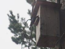 Ψαρόνι κοντά στο birdhouse Φωλιά του τεχνητού πουλιού στοκ φωτογραφίες