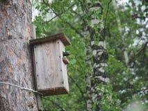 Ψαρόνι κοντά στο birdhouse Φωλιά του τεχνητού πουλιού στοκ εικόνες με δικαίωμα ελεύθερης χρήσης