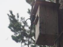 Ψαρόνι κοντά στο birdhouse Φωλιά του τεχνητού πουλιού στοκ φωτογραφία με δικαίωμα ελεύθερης χρήσης