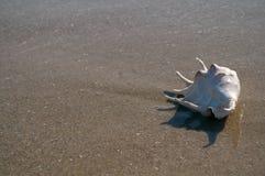 ψαλιδίζοντας απομονωμένο λευκό κοχυλιών θάλασσας μονοπατιών Στοκ εικόνα με δικαίωμα ελεύθερης χρήσης