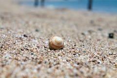 ψαλιδίζοντας απομονωμένο λευκό κοχυλιών θάλασσας μονοπατιών στοκ εικόνες με δικαίωμα ελεύθερης χρήσης
