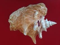 ψαλιδίζοντας απομονωμένο λευκό κοχυλιών θάλασσας μονοπατιών στοκ φωτογραφίες