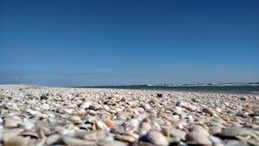 ψαλιδίζοντας απομονωμένο λευκό κοχυλιών θάλασσας μονοπατιών Στοκ Φωτογραφία