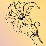 ψαλιδίζοντας απομονωμένο λουλούδι λευκό μονοπατιών κρίνων Στοκ φωτογραφία με δικαίωμα ελεύθερης χρήσης