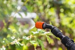 Ψεκάζοντας δέντρα ενάντια στα παράσιτα Στοκ Εικόνα