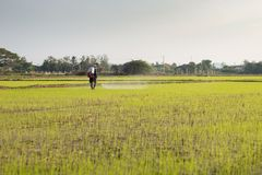 Ψεκάζοντας αγρότης εντομοκτόνου στοκ εικόνα